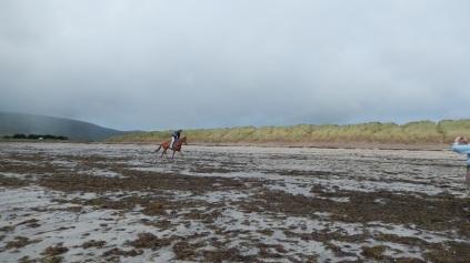 Horse on the beach